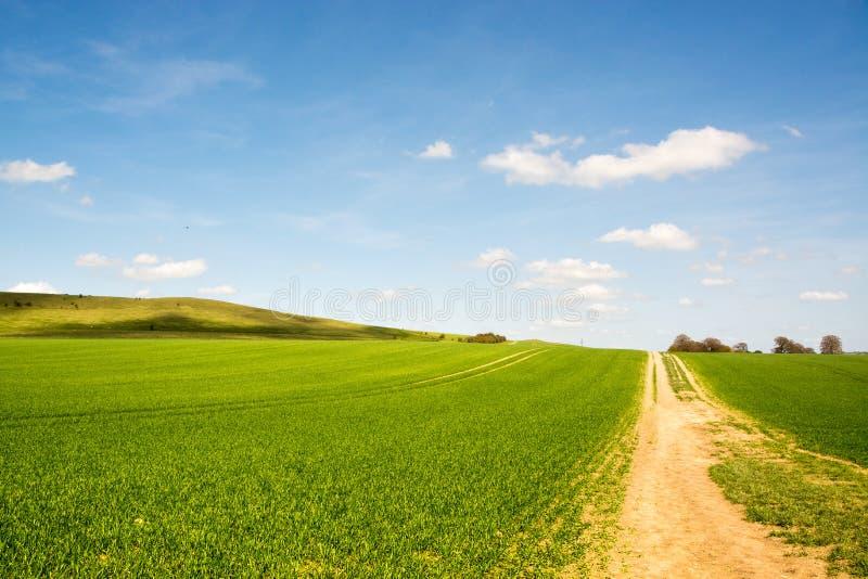 Jong aanplantingsgebied op heuvelig landschap op zonnige dag in de Lente stock afbeelding