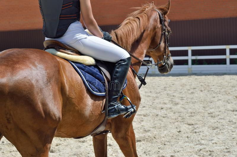 Jong, atletisch, volbloed- paard op dressuur, close-up stock foto's
