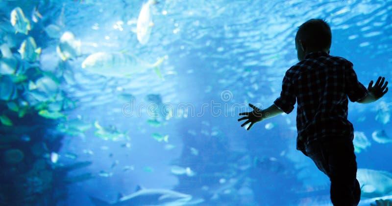 Jong geitje die op de ondiepte van vissen letten die in oceanarium zwemmen stock afbeelding