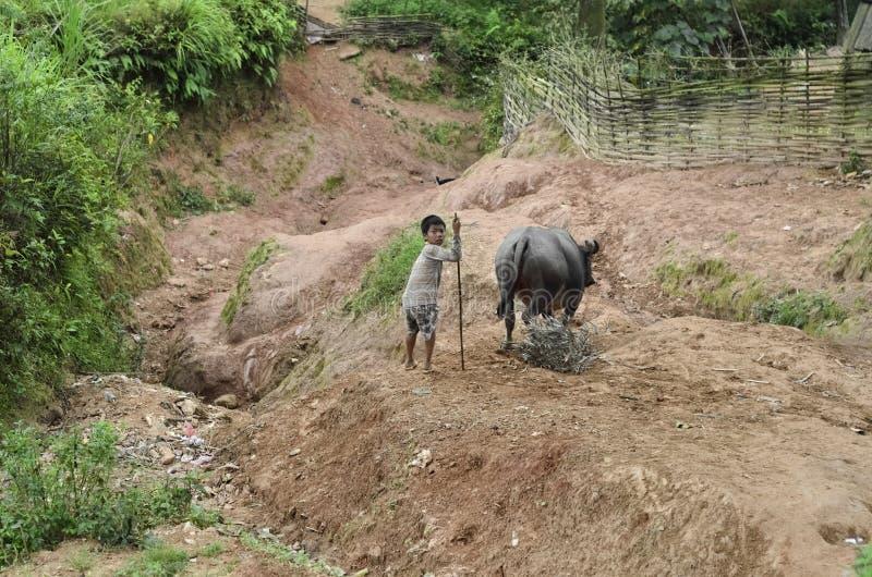 Jong geitje van de Zwarte Hmong-Etnische minderheidmensen en de waterbuffel stock afbeeldingen