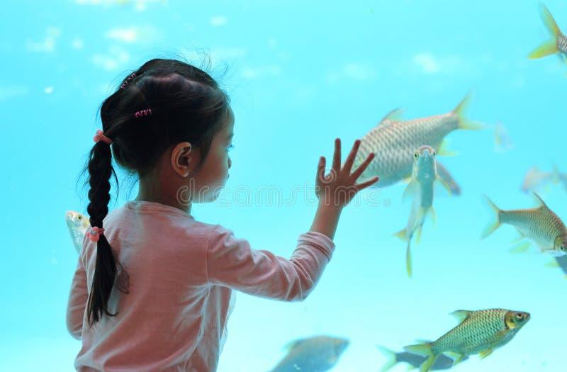 Jong geitjemeisje die vissen in tank kijken stock afbeeldingen