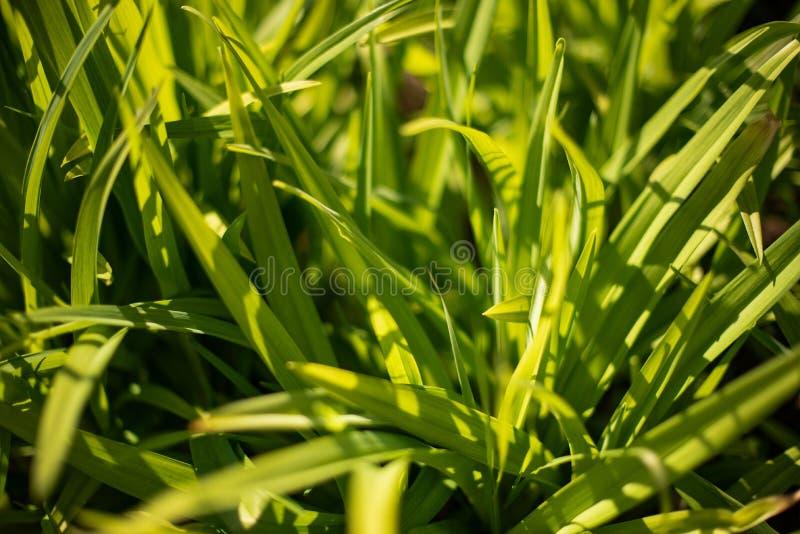 Jong groen gras in de zon royalty-vrije stock foto's