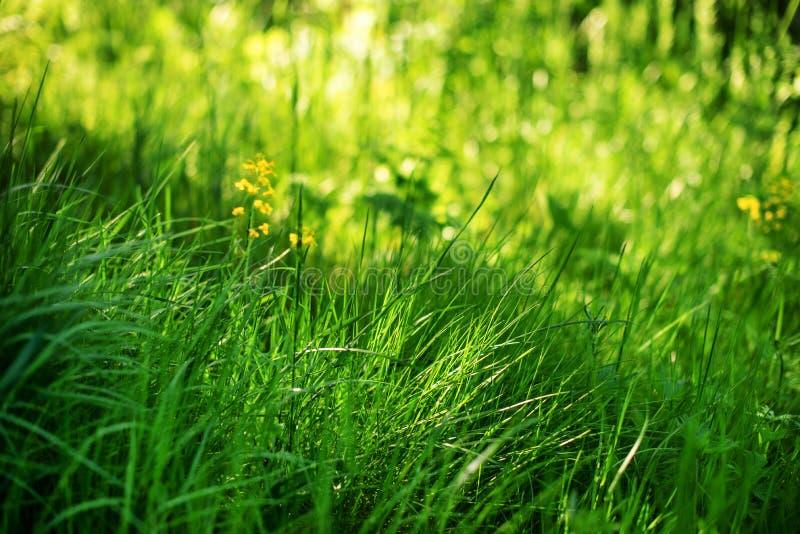 Jong groen gras in de zon royalty-vrije stock afbeelding