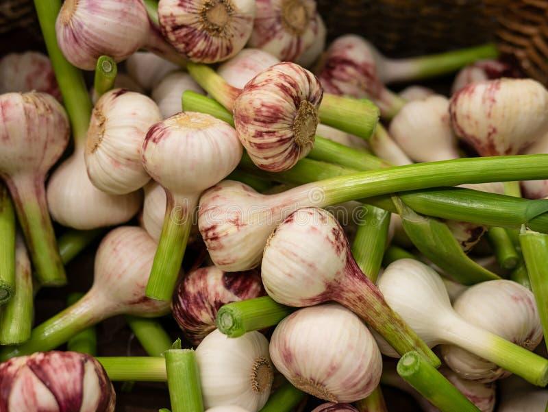 Jong knoflook Het jonge knoflook oogst vele garlics Landschap Een achtergrond van garlics Straat plantaardige markt royalty-vrije stock foto's