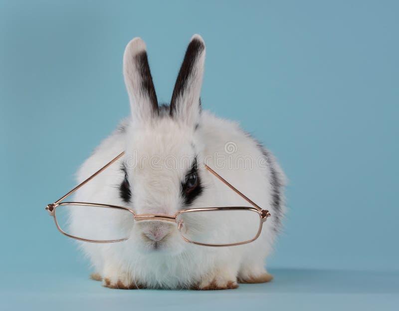 Jong konijn dat glazen draagt stock afbeelding