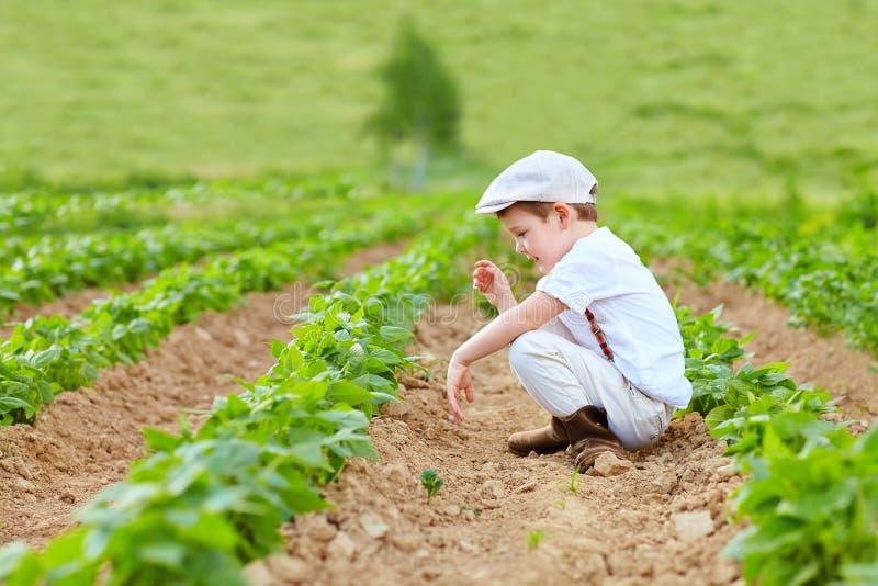 Jong landbouwersjong geitje die de boonbedden wieden royalty-vrije stock afbeelding