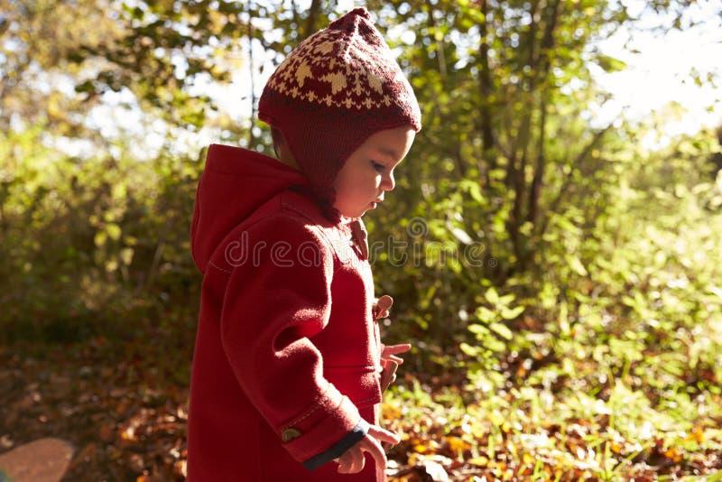 Jong Meisje die in Autumn Woodland lopen royalty-vrije stock foto's