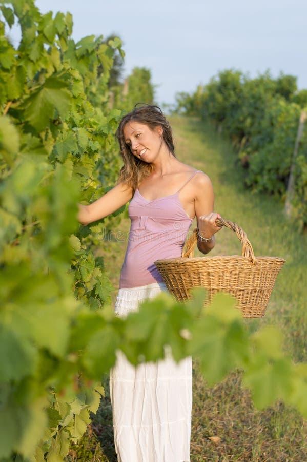 Jong meisje in druivenoogst met grote rieten mand voor het opslaan van g stock foto