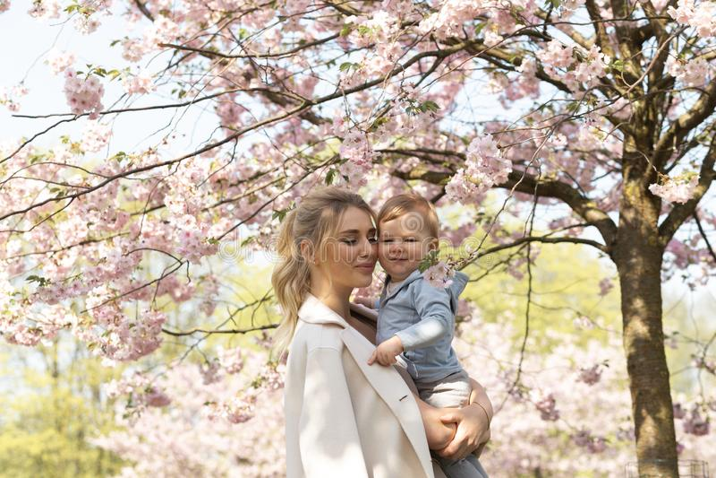 Jong moedermamma die haar houden weinig de jongenskind van de babyzoon onder tot bloei komende SAKURA Cherry-bomen met dalende ro stock afbeelding
