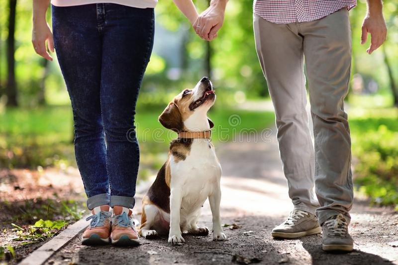 Jong paar dat met Brakhond loopt in het de zomerpark stock foto's