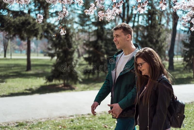 Jong paar die onder kersenbloesems lopen stock fotografie