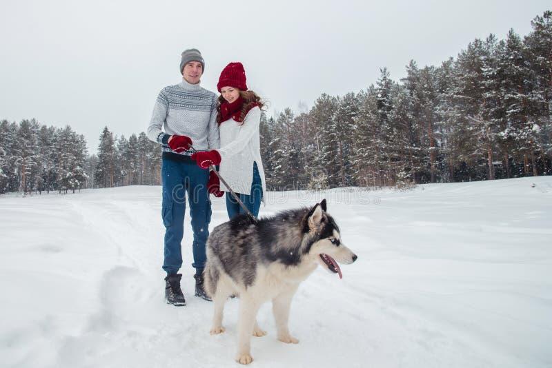 Jong paar met een Schor hond die in de de winterpark, mens en vrouw lopen die en pret met hond spelen hebben stock foto's