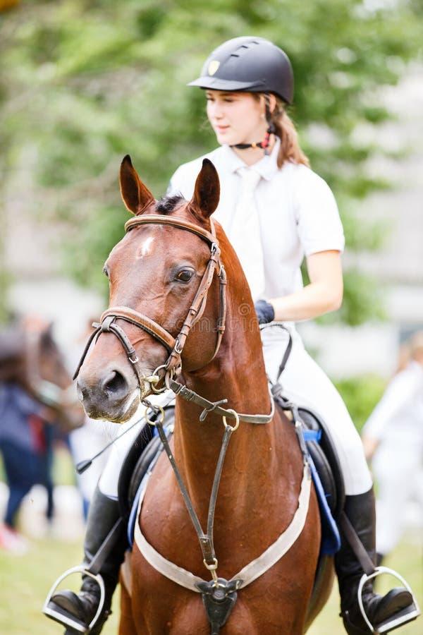 Jong ruitermeisje in helm op baaipaard royalty-vrije stock foto