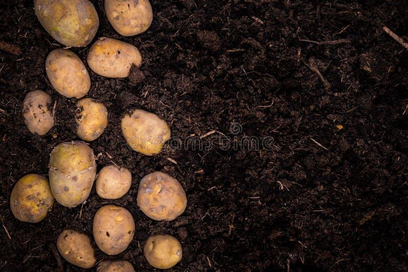 Jonge Aardappels op Grond, Grensachtergrond, Affichemalplaatje royalty-vrije stock foto