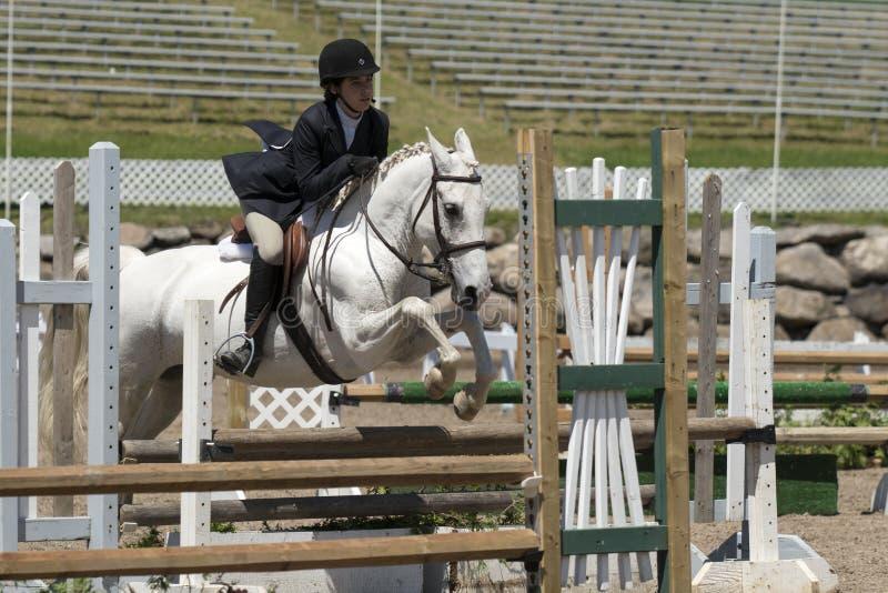 Jonge amazone op een wit paard royalty-vrije stock fotografie