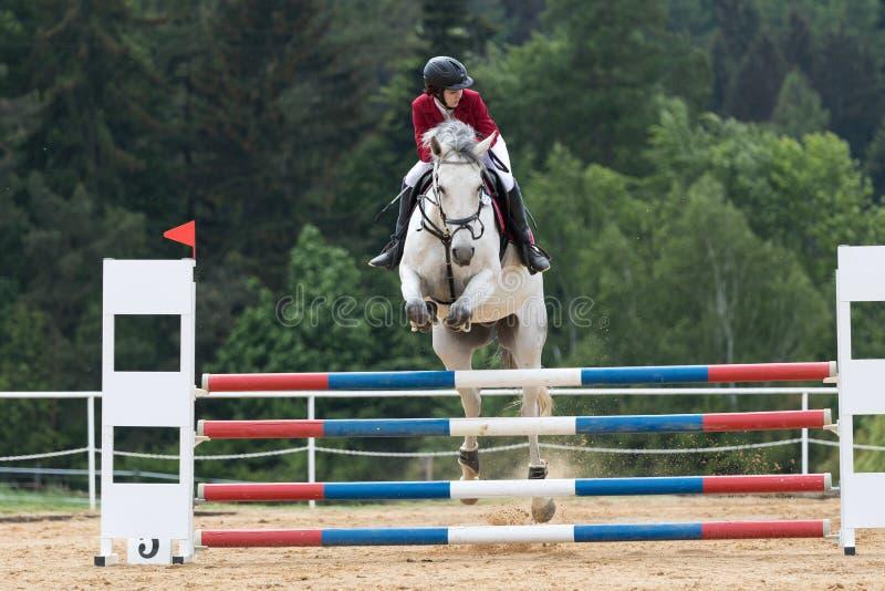 Jonge amazone in rood jasje op een wit paard stock afbeelding