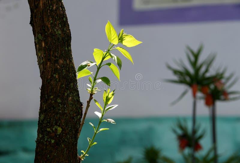 Jonge bladeren in de zon stock foto