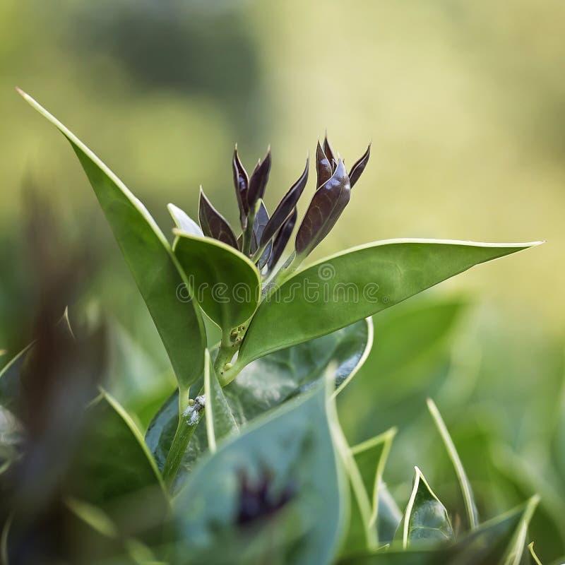 Jonge bladeren die aan het leven komen stock afbeeldingen