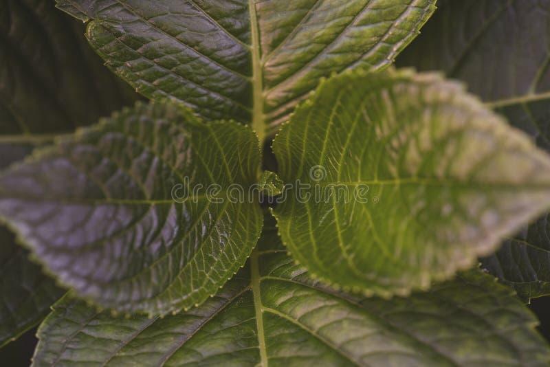 Jonge bladeren met vage groene tonen Natuurlijke groene achtergrond royalty-vrije stock fotografie