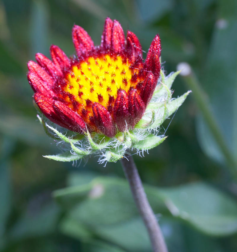 Jonge bloem stock afbeeldingen