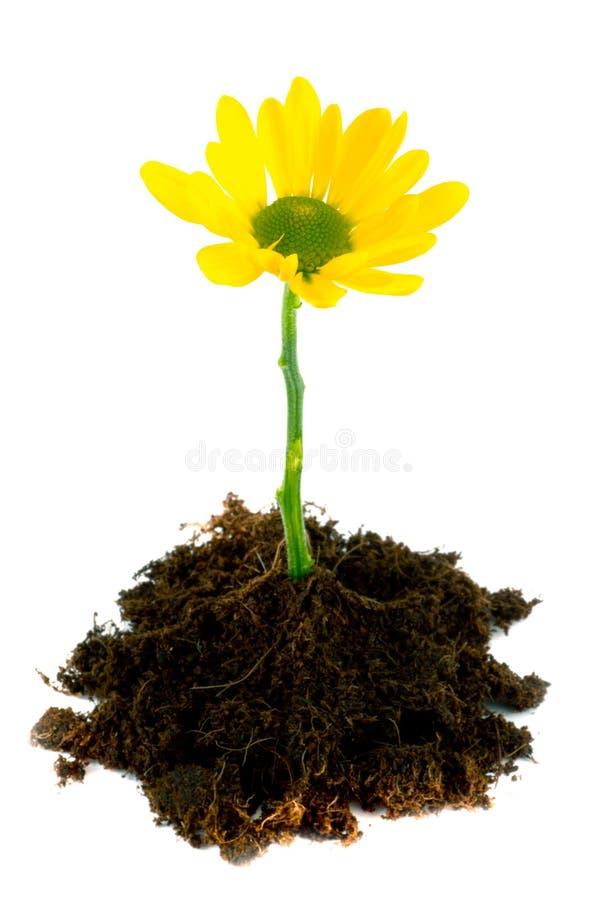 Jonge bloem. stock foto