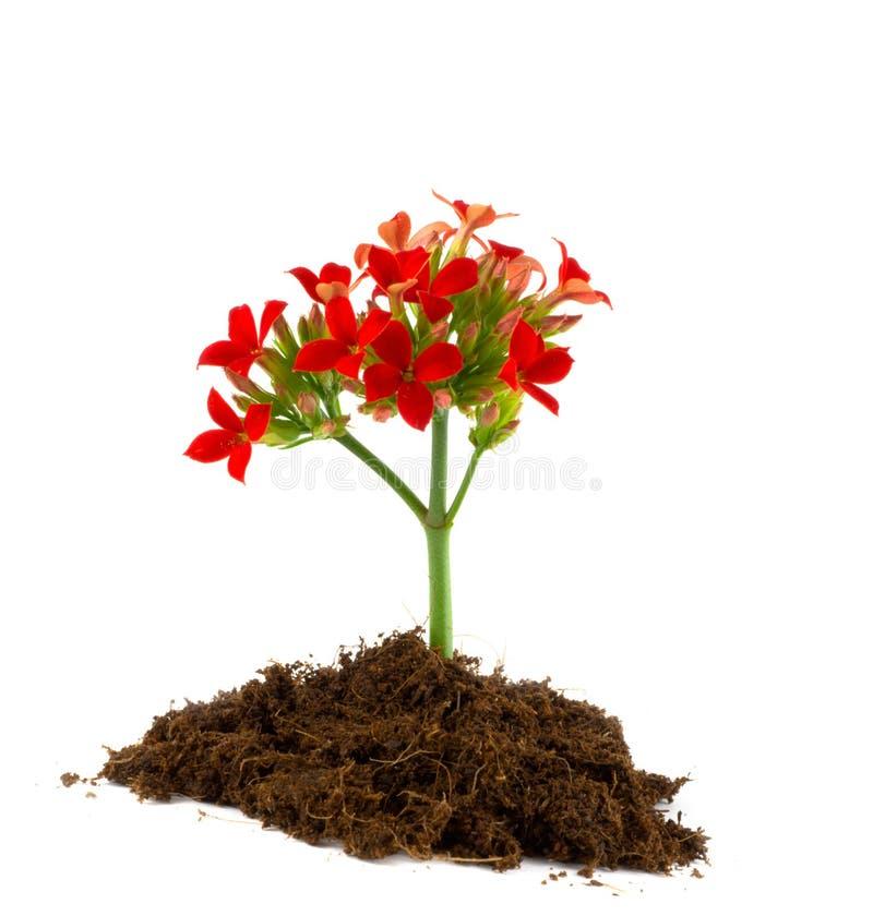Jonge bloem. royalty-vrije stock afbeeldingen