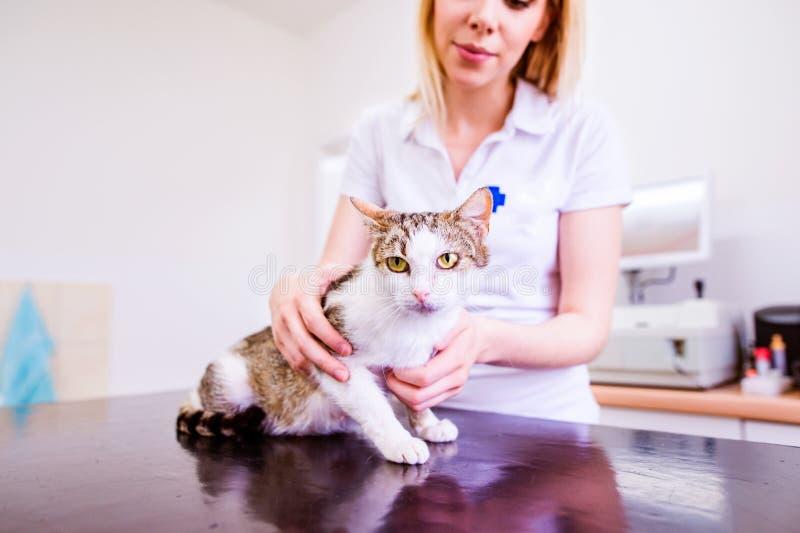 Jonge blonde dierenarts die kleine zieke kat houden Veterinaire cli stock afbeelding