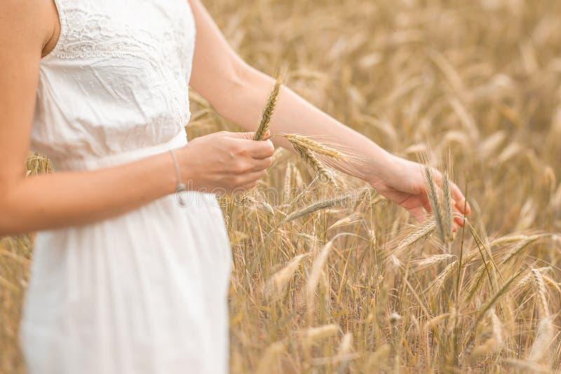 Jonge blondevrouw die op gouden tarwegebied en zich wat betreft tarweoren bij zonnige dag bevinden Het genieten van van aard Mooi royalty-vrije stock foto's