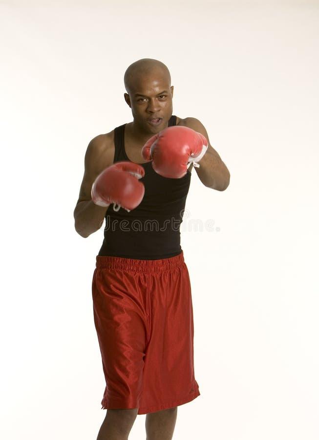 Jonge bokser royalty-vrije stock foto's