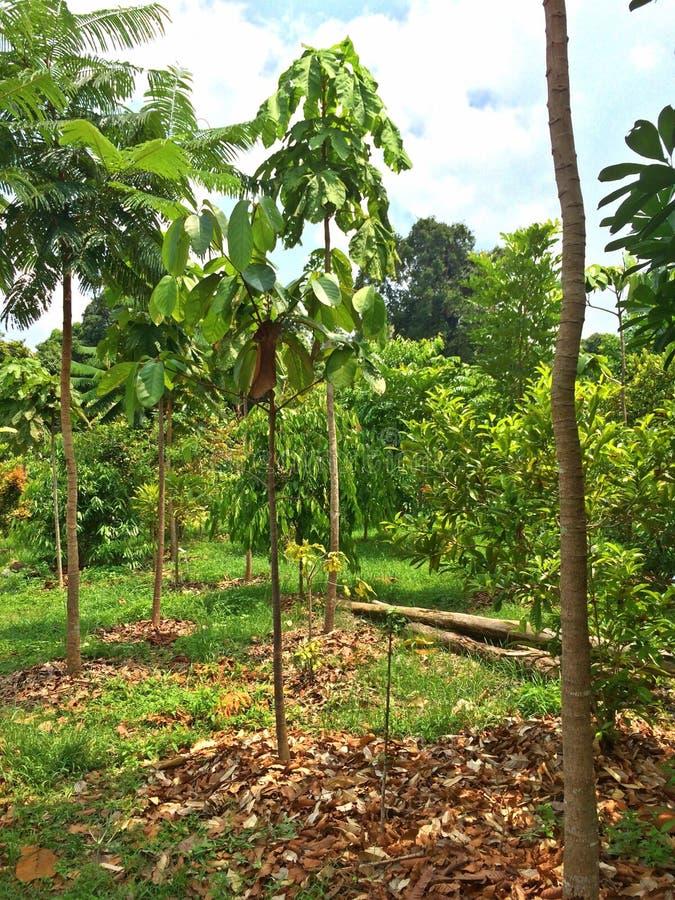 Jonge bomen - herbebossing