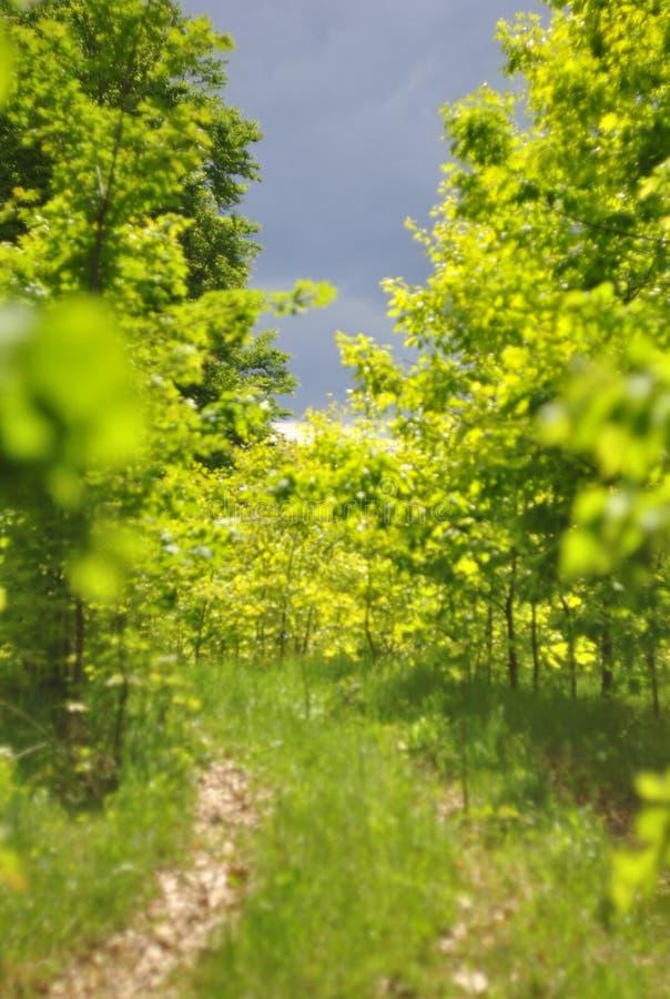 Jonge bomen in het bos en de weg stock afbeelding