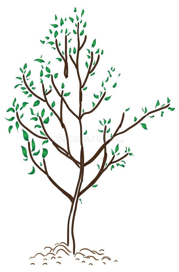 Jonge boom in de lente stock illustratie