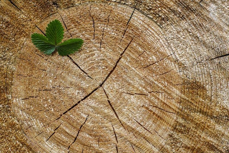 Jonge boom met groene bladeren en tedere spruiten royalty-vrije stock afbeelding
