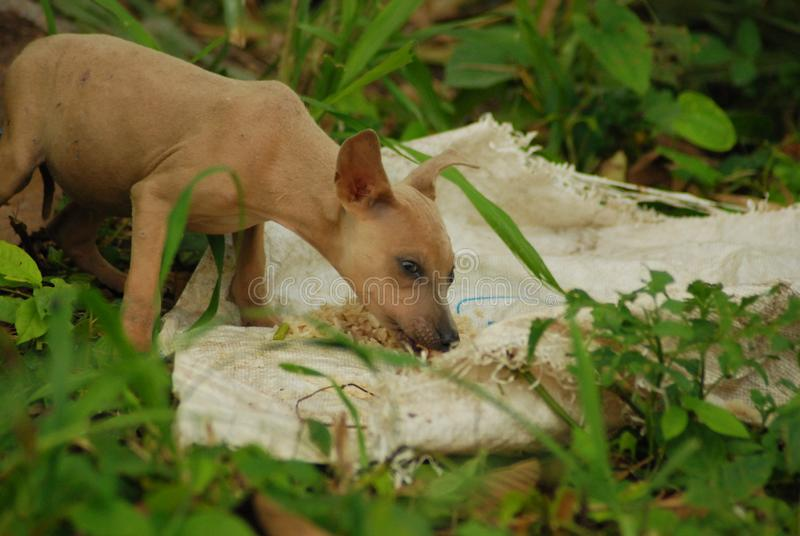 Jonge bruin verlaat verdwaalde en hond die wanneer gekregen voedsel schreeuwen eten royalty-vrije stock foto's