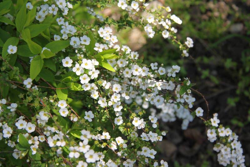 Jonge de lentebloemen stock afbeeldingen