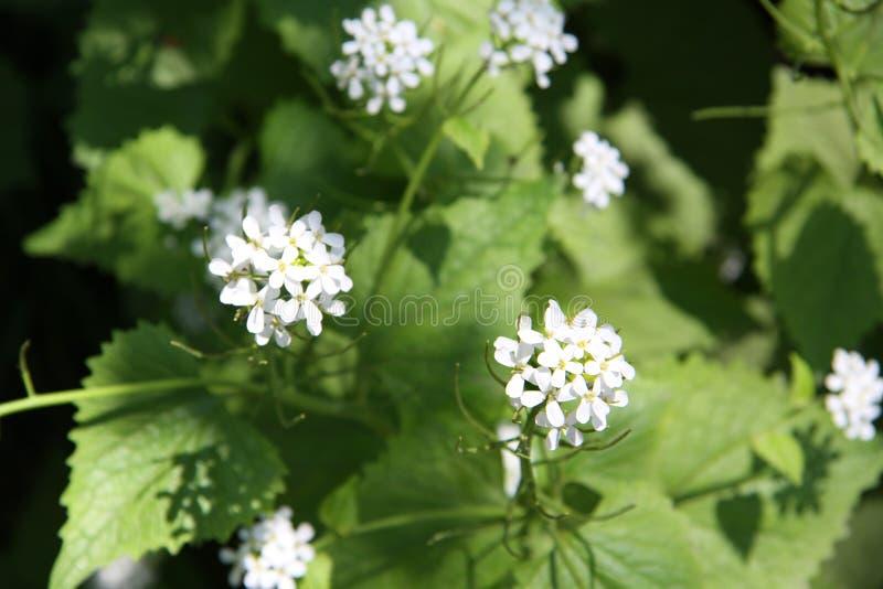 Jonge de lentebloemen royalty-vrije stock fotografie