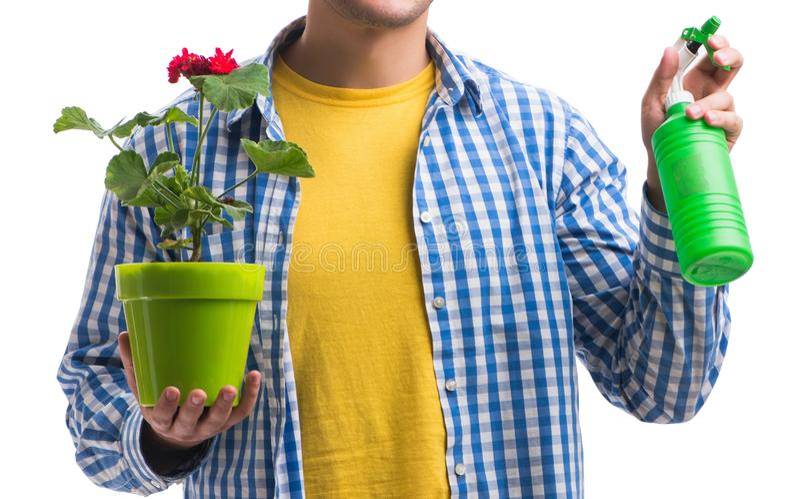 Jonge die mens met bloempot op wit wordt ge?soleerd stock afbeeldingen