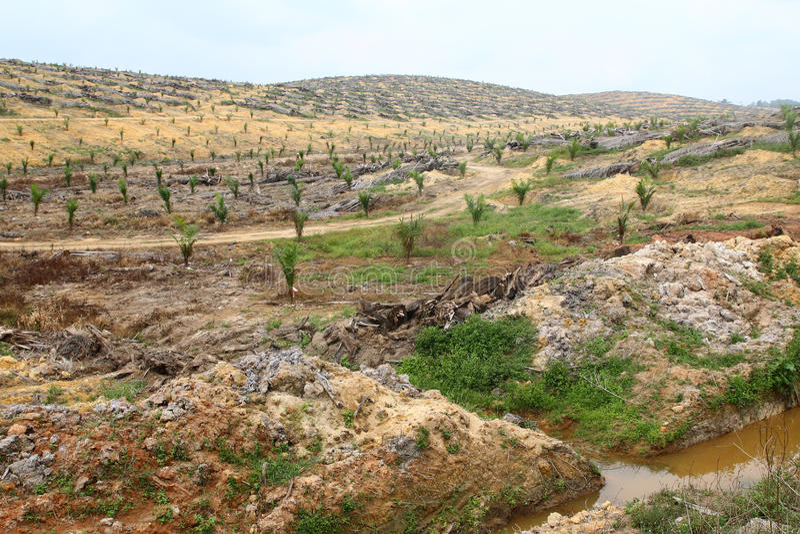 Jonge die oliepalmen op ontruimd land worden geplant - Reeks 5 royalty-vrije stock foto's