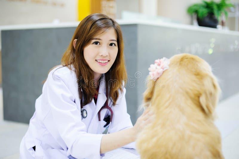 Jonge dierenarts bij het ziekenhuis stock foto's