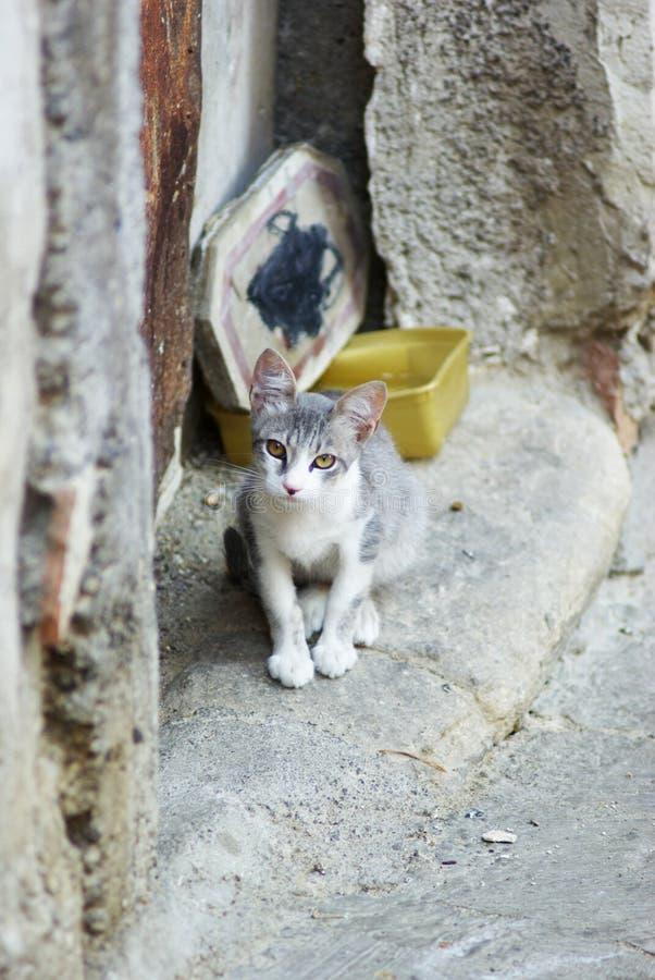 Jonge dierlijke kat royalty-vrije stock foto