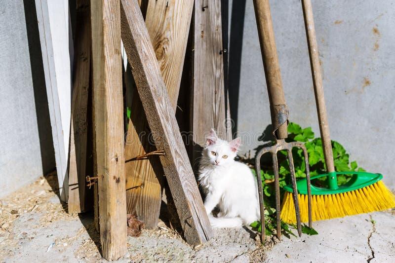 Jonge droevige dakloze witte kattenzitting bij de drempel in de yard royalty-vrije stock afbeeldingen