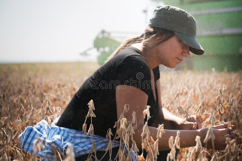 Jonge examing de sojabooninstallatie van het landbouwersmeisje tijdens oogst stock afbeelding