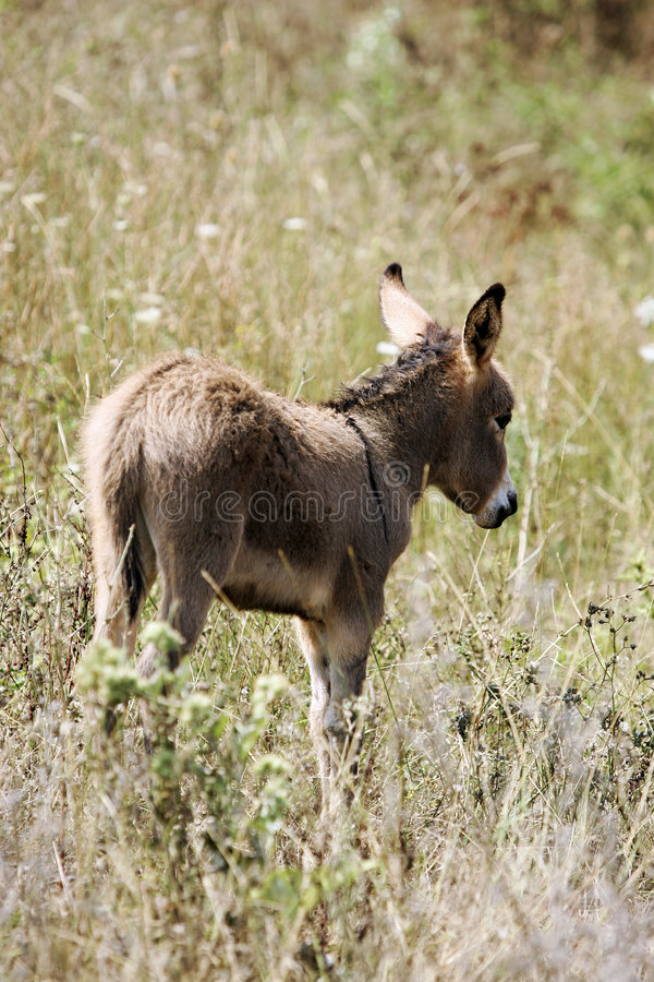 Jonge ezel royalty-vrije stock foto's