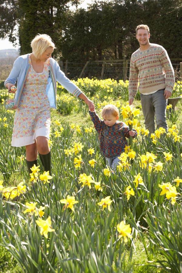 Jonge Familie die onder de Gele narcissen van de Lente loopt royalty-vrije stock foto's