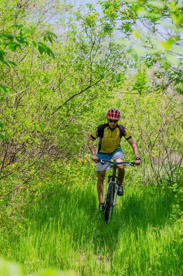 Jonge fietser die een helm dragen, die door het bos, B berijden stock foto's