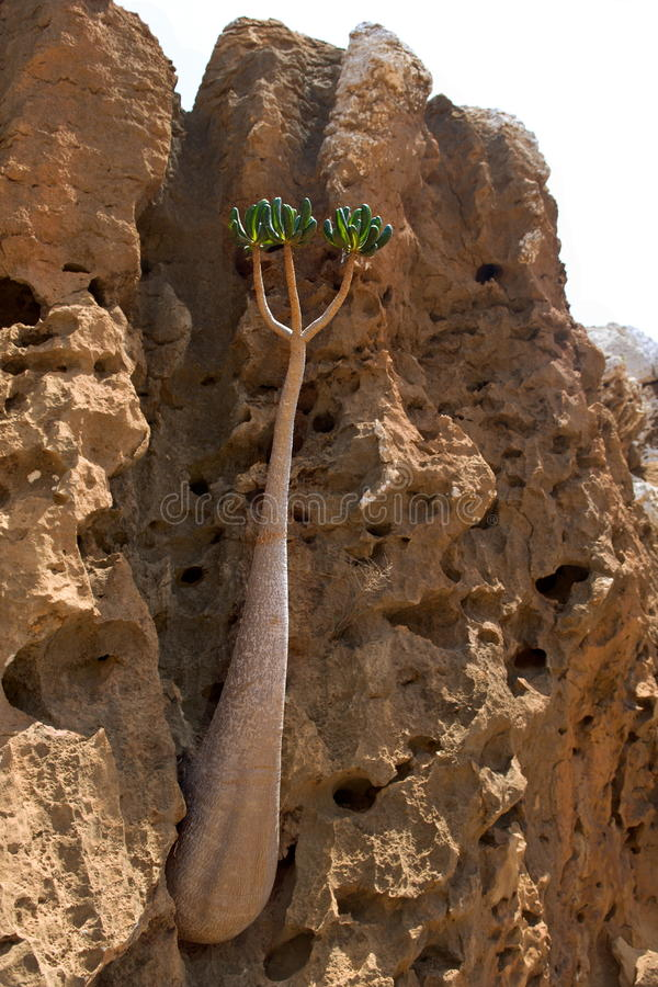 Jonge flessenboom royalty-vrije stock fotografie