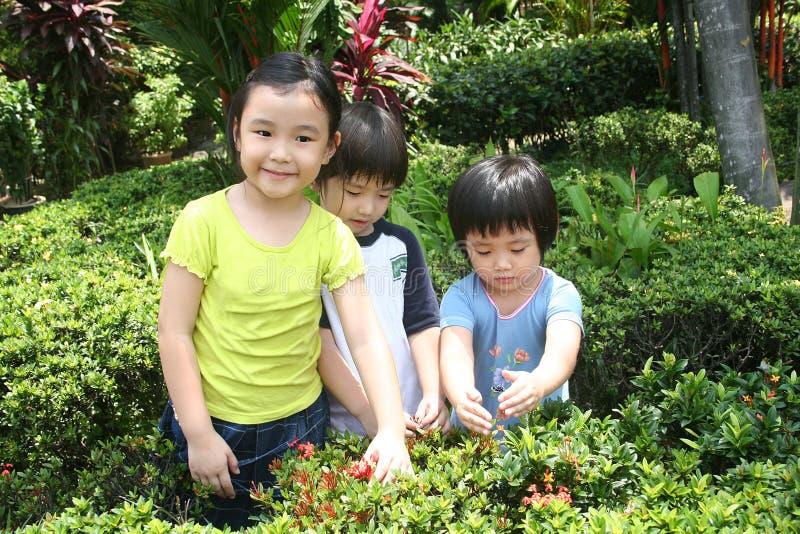 Jonge geitjes bij de tuin stock afbeeldingen