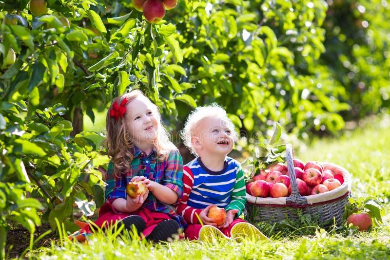 Jonge geitjes die appelen in fruittuin plukken stock fotografie