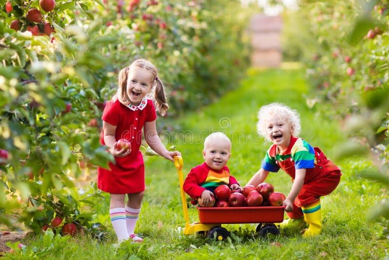 Jonge geitjes die appelen in fruittuin plukken stock afbeeldingen