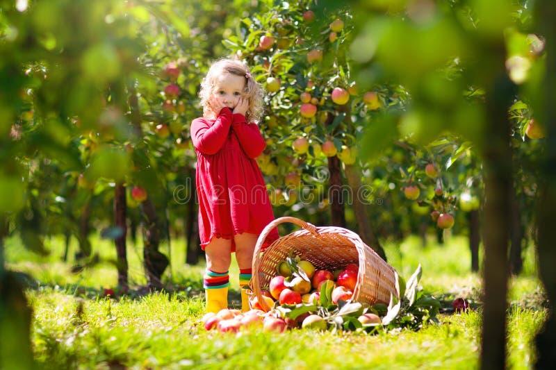 Jonge geitjes die appelen op landbouwbedrijf in de herfst plukken royalty-vrije stock foto